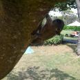 nostri amici scoiattoli
